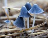 Group of Fungi on Hay Bale