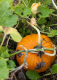 First Pumpkin 2010