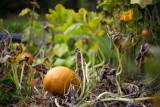 Third Pumpkin 2010