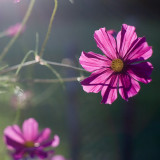 Backlit Cosmo Pair