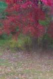 Through the Window on a Rainy Autumn Day #1
