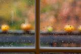 Rainy Autumn Pumpkins #2, Variation 2
