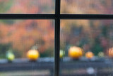 Rainy Autumn Pumpkins #3