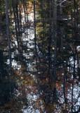 Dark Reflection Variation