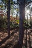Backlit Autumn Trees