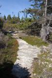 Stone Path #1