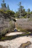 Stone Path #2