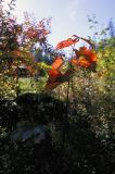 First Autumn