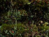 Stump Garden - The Little Things