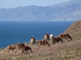 The Horses Of Monterey County