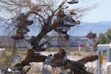 The Shoe Tree At Amboy