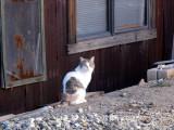 Cool Cat in The Desert!