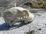 Skelett   Foto Ewa