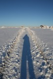 High Desert Snow
