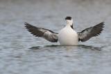 Birdpixweekend Terschelling Oktober 2012