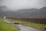 Napa Valley 2008