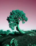 tree jpeg from psd file.jpg