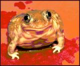 Toads of the Short Forest *