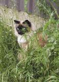 Green-Eyed Lady (Sugarloaf)