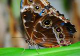 D3B_7035CinciButterflyCropB1.jpg