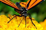 D3B_7437CinciButterflyCropB1.jpg