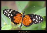 Serre aux Papillons (mai05)