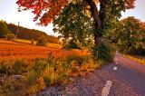 autumn in golden hour