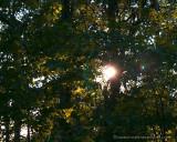 sunlight, sweden