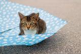 Cats and Umbrella