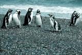 patagonia-344.jpg