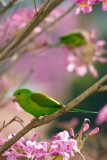 pawsbirdsspfc-38.jpg