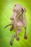 doghousehold-49.jpg