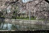 05-04-Springtime in Osaka-047 copy.jpg