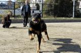 runningdogs1.jpg