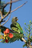 2005-12-Pantanal-026 copy.jpg