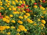 Flowers Creekside Dubai.jpg
