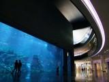 Aquarium Dubai Mall.jpg