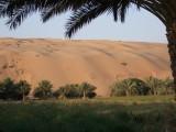 Liwa Oasis.jpg