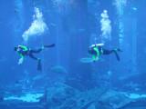 Atlantis Dubai 7.jpg