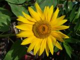Sunflower Creekside Dubai.jpg