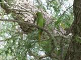 Parrot Mushrif Park Dubai