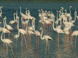 Flamingos Dubai.JPG