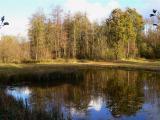 Olen : Olensbroek - herfst