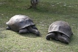 010-peaceful turtles.jpg