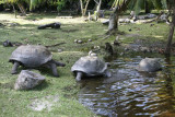018-turtles going back home.jpg