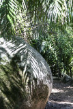 042-palms and rocks.jpg