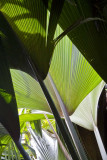 121-palm leaves.jpg