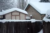 My Backyard 2