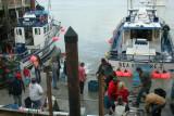 Oregon F&W Employee Checks For Tagged Fish