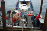 Newport Tradewinds Dock